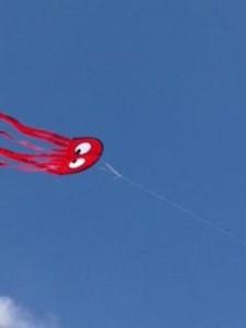 premier kites 11