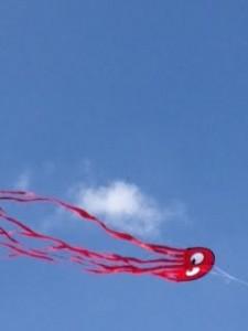 premier kites 12